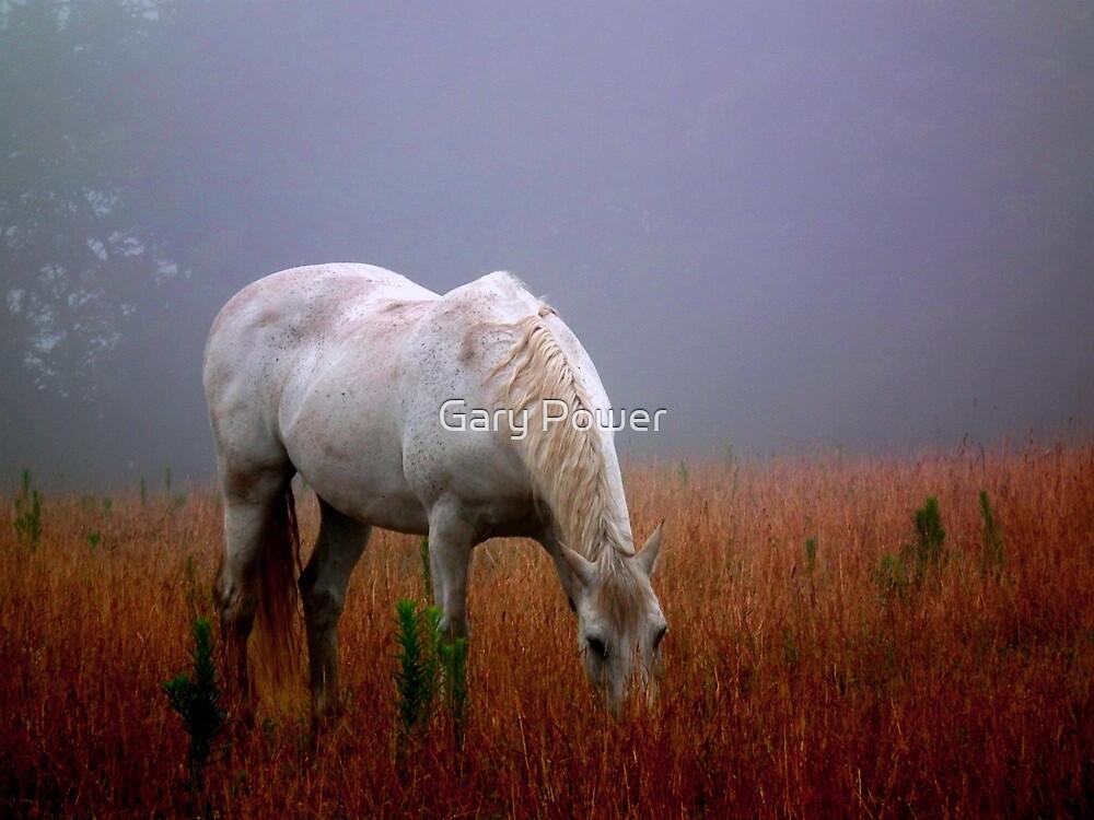 Through the mist 2 by Gary Power