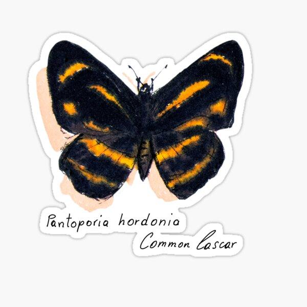 Schmetterling Common Lascar Sticker
