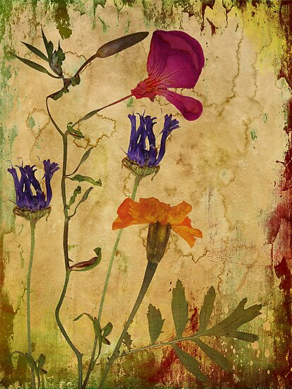 Find the beauty in dried flowers by Myillusions