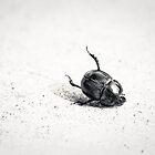Crash Landing by BruceMacArthur