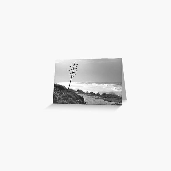 Tarifa Beach Greeting Card