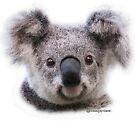 Krissy koala - wild and free by koalagardens