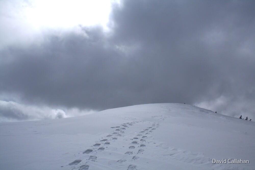 Snowy Footprints by David Callahan