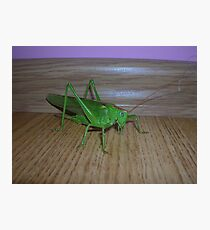 Skakavac (Orthoptera) Photographic Print