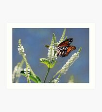 Monarch On Almond Blossoms, Dry Brush Painting Art Print