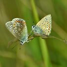 Two Blues by Russell Couch