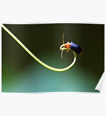 Insect 2 Poster