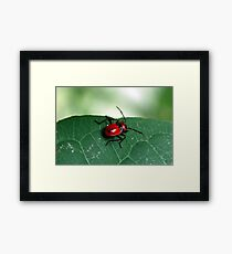 Insect 4 Framed Print