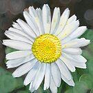 daisy by Leeanne Middleton