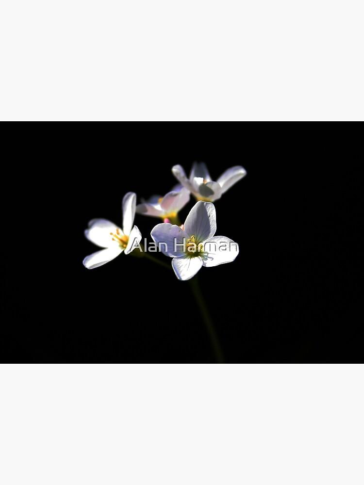Cardamine Pratensis Flowers by AlanHarman
