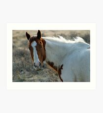 Paint on the Prairie, Montana horse picture. Art Print