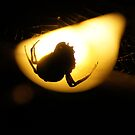 Spider in silhouette at night by agenttomcat