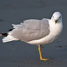 Model Seagull - Middletown, Rhode Island by Jim Haley