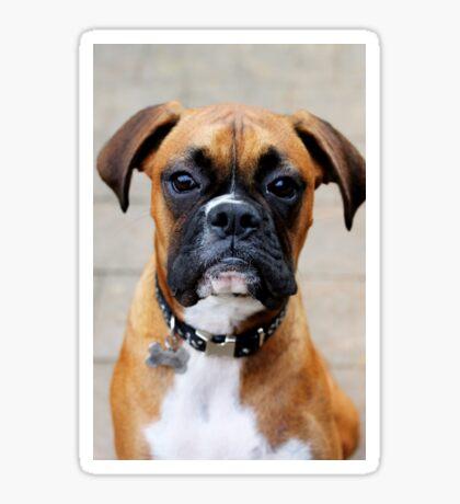 Boxer-Porträt - Boxer-Hundeserie Sticker