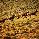 Wild horses running up ridge by socalgirl