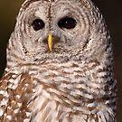 Dark Lenses / Barred Owl by Gary Fairhead