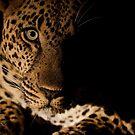 """""""Watching you"""" - Mala Mala South Africa by ShaunWalton"""
