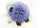 We three bees....... by inkedsandra