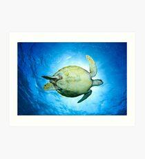 A Turtle's Underside Art Print
