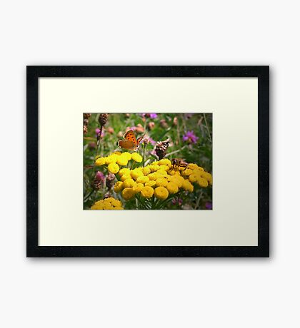 Butterfly and Fly Framed Print