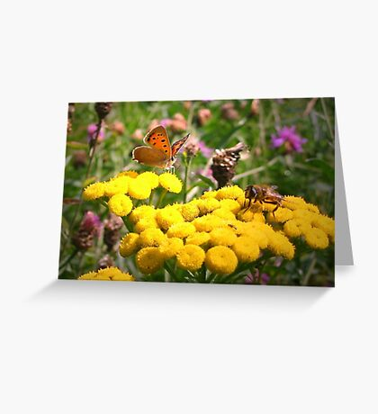 Butterfly and Fly Greeting Card