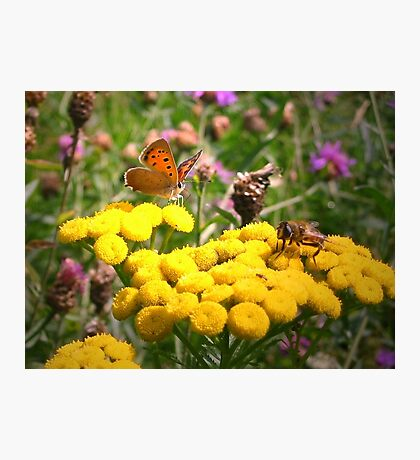 Butterfly and Fly Photographic Print
