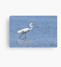 The Great Egret's Juggling Act Canvas Print