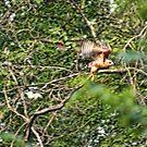 Hawk Take Off by Rick  Friedle
