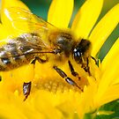 HONEY BEE by mc27