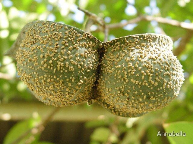 A seedpod or a bikinitop? by Annabella