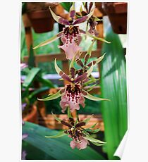 Orchids & Lattice Poster