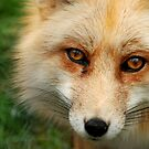 What a Fox!  by Malena Fryar