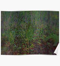 Woodland  Ferns  Scene  Poster