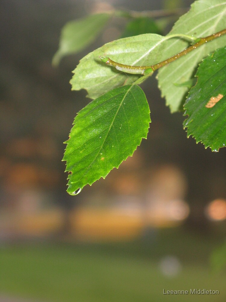 birch leaves by Leeanne Middleton