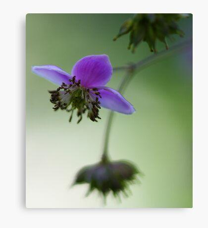 -Meadowrue -- Lavender Mist Canvas Print