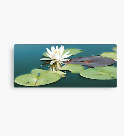 White Pond Lily - Otter Pond Canvas Print