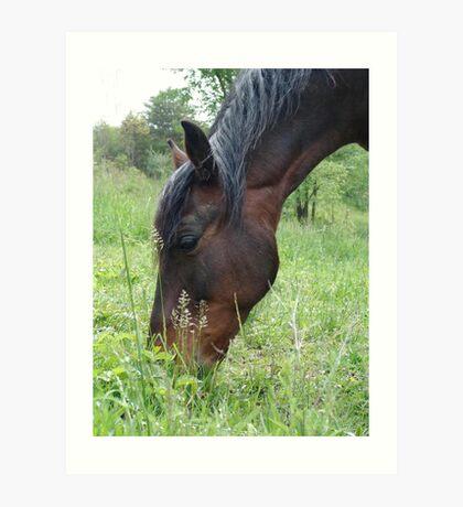 TOBY, THE RACKING HORSE Art Print