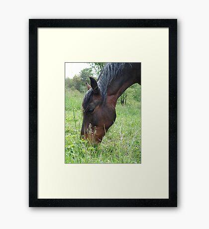 TOBY, THE RACKING HORSE Framed Print