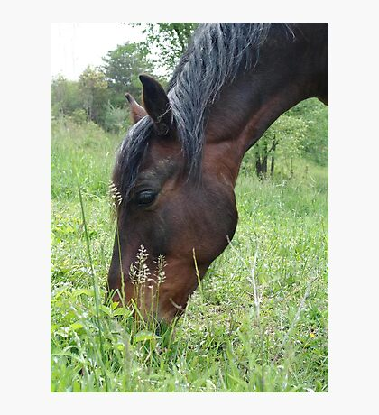 TOBY, THE RACKING HORSE Photographic Print
