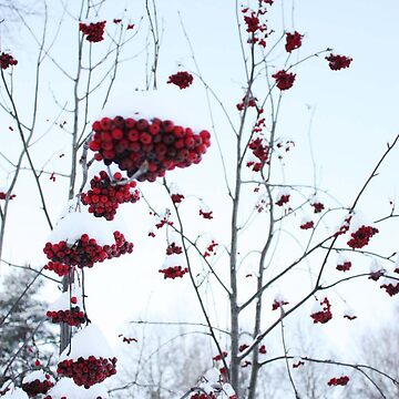 Red in white  by wiinsome
