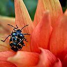 Modebewusste Käfer von Celeste Mookherjee