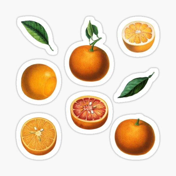 Orange Citrus Stickers Nr. 1 Sticker