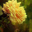Vintage Rose by Jane Brack