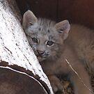 baby lynx by Leeanne Middleton