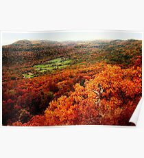 Ozark National Forest in Autumn Poster