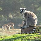 The Thoughtful Lemur by Vanessa Zakas