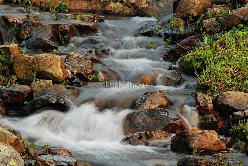 Little Stream at Lake Tipsoo by Tori Snow