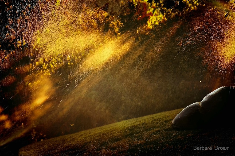 Evening Light by Barbara  Brown