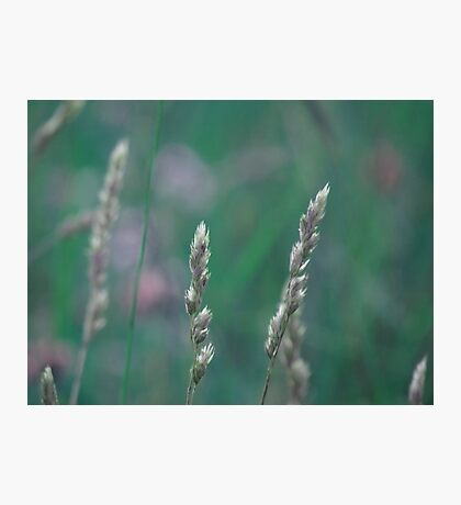 summer grass 23 Photographic Print