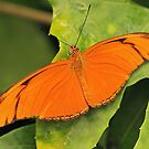 Orange Butterfly by Maria Meester